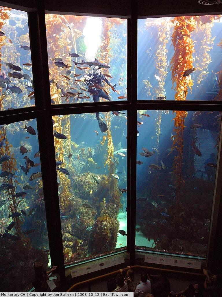 - Monterey Bay Aquarium