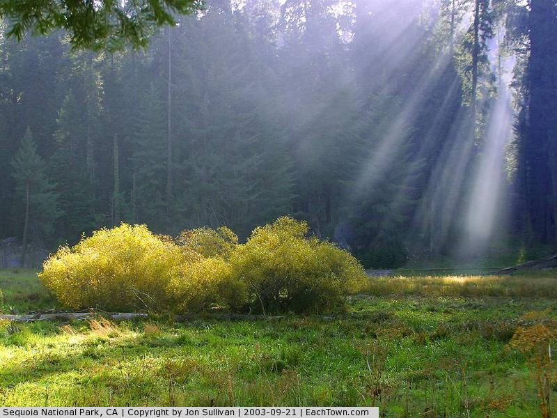 - Rays on the meadow