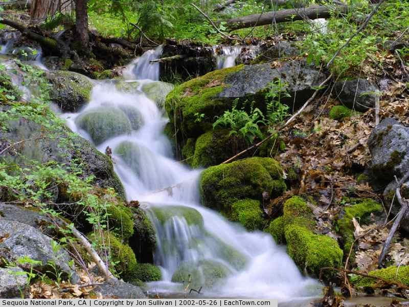 - Stream at Sequoia National Park