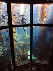 Monterey, CA photo