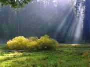 Sequoia National Park, CA - Rays on the meadow