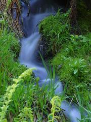 Stream at Sequoia National Park